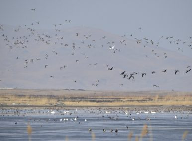 Saving North Korea's Wetlands