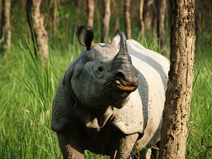 Nepal's Success in Wildlife Conservation