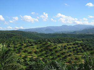 The Palm Oil Conundrum in EU-ASEAN Relations