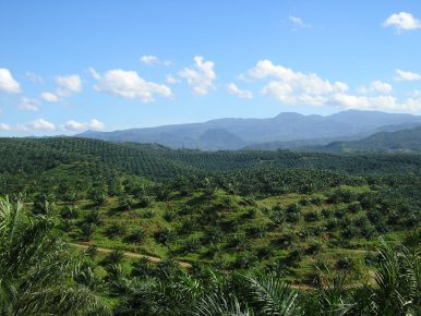 Overcoming the EU-Indonesia Palm Oil Challenge