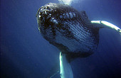 Japan Loses Bid to Reinstate Commercial Whaling