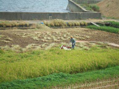 Taiwan Votes to Maintain Import Ban on Fukushima Food Imports