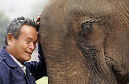 Can the Land of a Million Elephants Survive the Belt and Road?