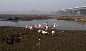 Depoliticizing South Asia's Water Crisis