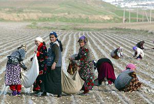 Jonas Astrup on Reforming Uzbekistan's Cotton Industry