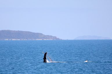Australia Unhappy About Japan's Return to Whaling