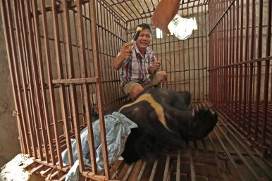 The Stalemate Driving Vietnam's Illegal Wildlife Trade