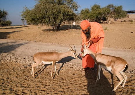 The Bishnoi: India's First Environmentalists