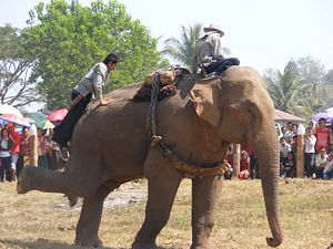 The Truth About Asia's Elephant Tourism