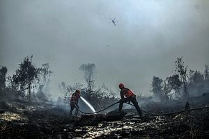 Indonesia's Haze Crisis and the Problem with Palm Oil