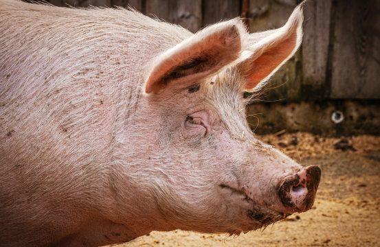 Pork and Huawei: US-Canada-China Trade Triangle