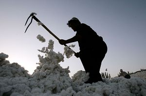 Cotton and Corporate Responsibility: Fighting Forced Labor in Xinjiang and Uzbekistan