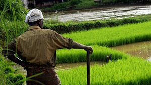 Climate Change and South Asia's Pending Food Crisis