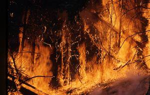 Australia Frantically Battles 'Catastrophic' Wildfires