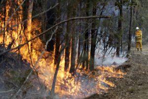 Misinformation Amid Australia Bushfire Crisis