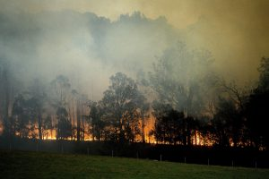 What We Can All Learn From Australia's Bushfires