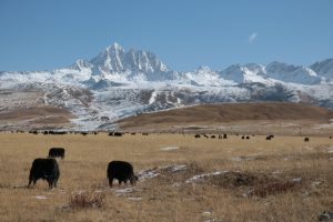 Coronavirus: The View From the Chinese Himalayas