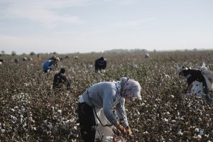 Beyond the Pledge: Is It Time to Lift the Boycott of Uzbek Cotton?