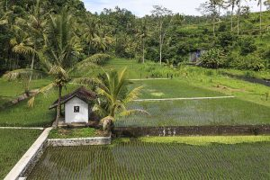 Is Indonesia Facing a Looming Food Crisis?