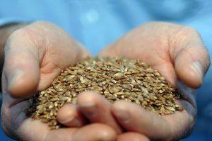 China's Tariffs on Australian Barley: Coercion, Protectionism, or Both?