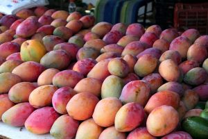 US Diplomacy in Pakistan: The Case of the Missing Mangoes