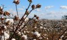 Kristian Lasslett on Uzbekistan's Cotton Clusters Conundrum