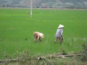 Vietnam Land Dispute Trial Terminates in Guilty Verdicts