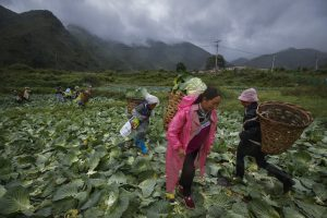 China, Food Security and Geopolitics