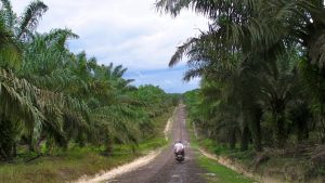 Indonesia's New Omnibus Law Trades 'Green Growth' for Environmental Ruin