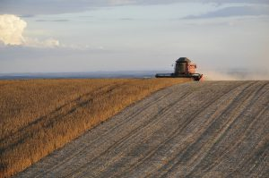 Reading the Soy Leaves: What Soybean Imports Say About China's 2020 US Election Preferences