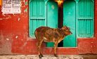 A Cow Cabinet in Madhya Pradesh?