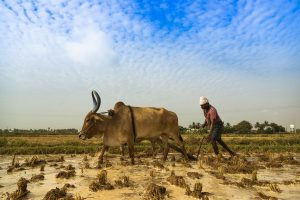 Farmers Protests in India: Politics Over Economics?