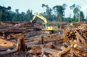 A Spotlight on the Right to a Healthy Environment in Southeast Asia