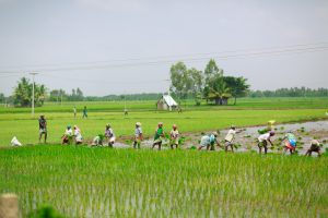 India's New Farm Laws: Reform, Resistance, and the Road to Reconciliation