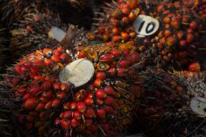 Indonesia, Malaysia Step Up Palm Oil Lobbying: Report