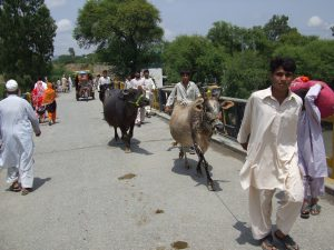 A Brief History of Mangal Bagh