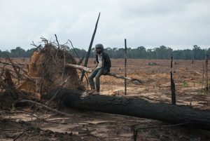 Logging Accelerates in Cambodia's Prey Lang Sanctuary