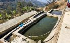 Rainbow Trout Aquaculture in Nepal: Promise Amid Shocks