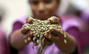 Why is Timor-Leste Still Unable to Diversify its Economy?