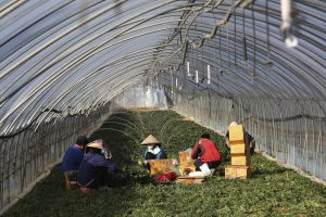 Migrant Workers Face Dire Conditions at South Korean Farms