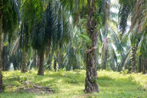 WTO to Review Malaysia-EU Palm Oil Spat. What Happens Next?