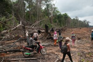USAID Cuts Support to Flagship Forest Protection Project in Cambodia