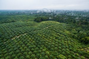 Indonesia Needs to Seek Out Alternative Sources for Biofuel