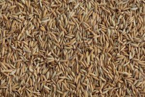 Vietnam's Battle to Market Its Prized Rice