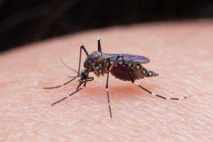 How Papua New Guinea Can Eliminate Vector-Borne Diseases