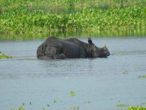 The Brahmaputra's Raging Waters Wreak Havoc in Assam