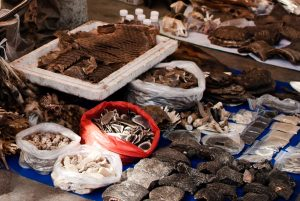 Southeast Asia Faces Narrow Window to Tackle Endangered Wildlife Trade