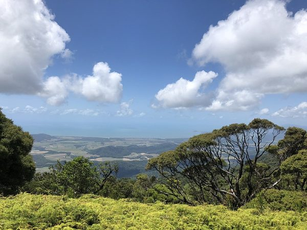 La selva tropical de Daintree en Australia devuelta a los propietarios indígenas – The Diplomat