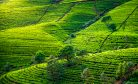 Does Sri Lanka Really Have a Food Crisis?