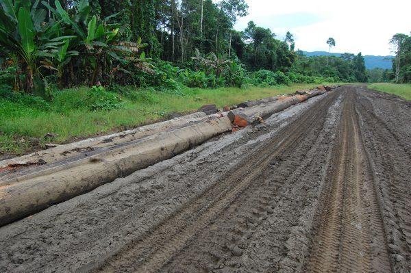 ¿Cuál es el costo real del aceite de palma de Papúa Nueva Guinea?  – El diplomático